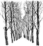 Trees in winter park Royalty Free Stock Images