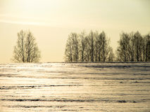 Trees in winter in Russia. The winter landscape is beautiful, and the trees (birch) look at the background of white snow, meadows and fields very picturesque Stock Images