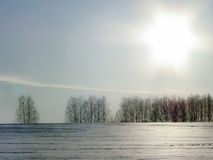 Trees in winter in Russia. The winter landscape is beautiful, and the trees (birch) look at the background of white snow, meadows and fields very picturesque Royalty Free Stock Photography