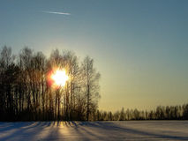 Trees in winter in Russia. The winter landscape is beautiful, and the trees (birch) look at the background of white snow, meadows and fields very picturesque Stock Photography