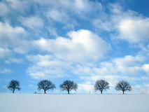 Trees in winter season. With snow in foreground and blue sky with clouds Royalty Free Stock Photography