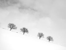 Trees in winter season (9). Trees in winter season, black and white image, snow in front Royalty Free Stock Photos