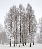 Trees in the winter Stock Image