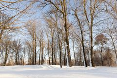 Winter time royalty free stock image
