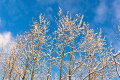 Trees in winter in snow Stock Photos