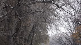 Trees, Winter, Snow, Christmas. Stock video during a blizzard stock video