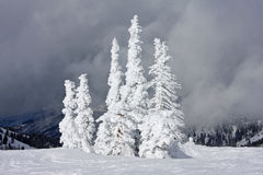 Trees in Winter Royalty Free Stock Photos