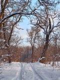 Trees winter snow stock photo