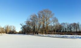 Trees in winter, snow Stock Photo