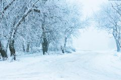 Winter snow cold road among hoarfrost trees royalty free stock image