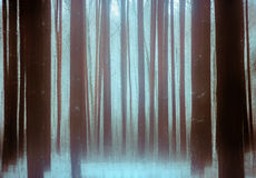 Trees In a Winter Snowy Forest. Trunks of trees in a winter snowy forest. Filter motion blur Stock Photo