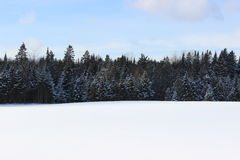 Trees in Winter. In Southern Quebec stock photos