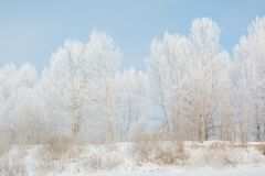 Trees in winter in winter. Beautiful winter landscape. Frost on trees in winter. Siberia royalty free stock photos