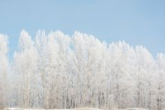 Trees in winter in winter. Beautiful winter landscape. Frost on trees in winter. Siberia royalty free stock photo