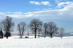 Trees in the wintersun. Row of naked trees in the wintersun Royalty Free Stock Photo