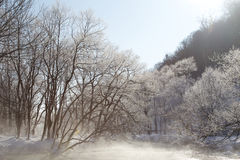 Trees in Wintertime Royalty Free Stock Photography