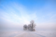 Trees in wintry countryside Stock Photos