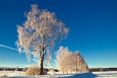 Trees in wintry landscape Stock Photos