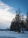 Trees in wintry landscape. Scenic view of trees in wintry landscape with blue sky and cloudscape background, Pyhajarvi, Tampere, Finland Royalty Free Stock Image