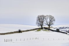 Trees in wintry landscape Stock Images