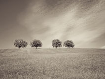 Free Trees With Blue Sky And Clouds 33 Royalty Free Stock Photos - 83557898