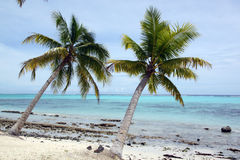 Trees and withe sand beach Royalty Free Stock Images