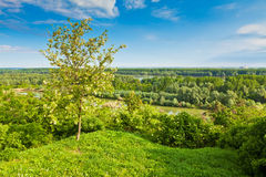 Trees in the wood by the Danube river Royalty Free Stock Photo