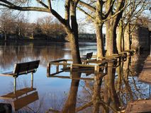 Trees reflected in flood water, York, England. Trees and wooden benches reflected in flood water on an autumn day in York, England royalty free stock image