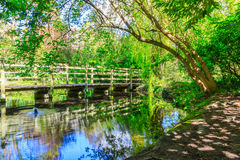 Trees and a wooden bridge at New River Walk, London. Surrounding trees and foliage with a wooden bridge reflected in rippled canal water at the New River Walk royalty free stock image