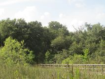 Trees and wooden fence in a Florida nature park. Landscape of woods and plantlife from a park in Broward County, Florida Stock Image
