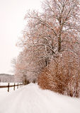 Trees and wooden fence in winter Royalty Free Stock Photos