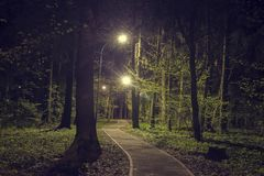 Trees in woodland park with lights at dark night. Landscape of night spring green park in city. Path in green forest. With lanterns in the park Stock Photo