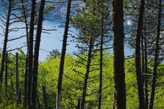 Trees and woods on the Cinque Terre sea. Trees and sea in a panorama of the Cinque Terre Province of La Spezia royalty free stock photo