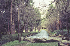 Trees in the woods, landscapes Stock Photos
