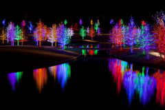 Trees wrapped in LED lights for Christmas. Trees tightly wrapped in LED lights for the Christmas holidays reflecting in lake. Each tree is wrapped in one color Royalty Free Stock Photography