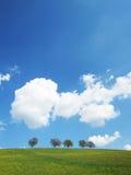 Trees with blue sky (29) Stock Photos