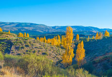 Trees in yellow autumn colors in sunlight Stock Images