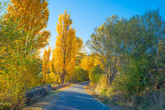 Trees in yellow autumn colors in sunlight Royalty Free Stock Photo