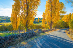 Trees in yellow autumn colors in sunlight Stock Image