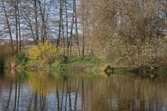 Trees with yellow foliage adorn the banks of the river in autumn. Beautiful season royalty free stock image