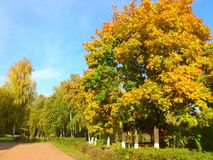Trees with yellow foliage in autumn park Royalty Free Stock Photography
