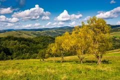 Trees with yellow foliage on grassy slope. Beautiful countryside landscape with gorgeous cloudscape in early autumn Royalty Free Stock Photography