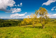 Trees with yellow foliage on grassy slope. Beautiful countryside landscape with gorgeous cloudscape in early autumn Royalty Free Stock Image