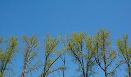 Trees with yellow green foliage and blue sky Stock Photography