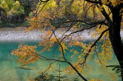 Trees with yellow leaves near the mountain lake Royalty Free Stock Images