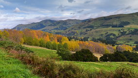Trees with yellow and orange leaves at Banks Peninsula in Canterbury Royalty Free Stock Images