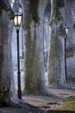 Trees in Zrinjevac park, Zagreb, Croatia. Beautiful early morning vista in Zrinjevac park, Zagreb, with old plane trees and historic lanterns Stock Photo