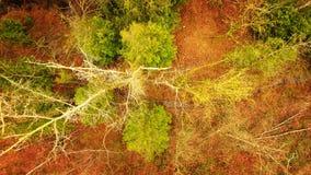TreeScape imagem de stock