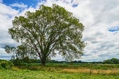 TreeScape Royalty-vrije Stock Foto's