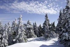 Treescape di inverno Fotografia Stock